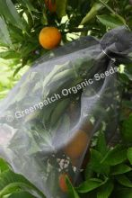 Fruit Fly Exclusion Bags