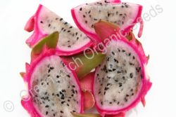 Dragon Fruit - White Flesh Plant