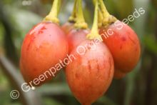 Tamarillo - Red Plant