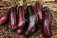 Eggplant - Long Purple