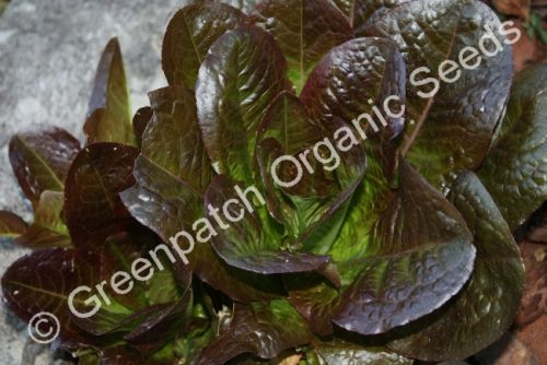 Lettuce - Brown Romaine
