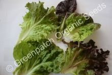 Lettuce - Summer Mix