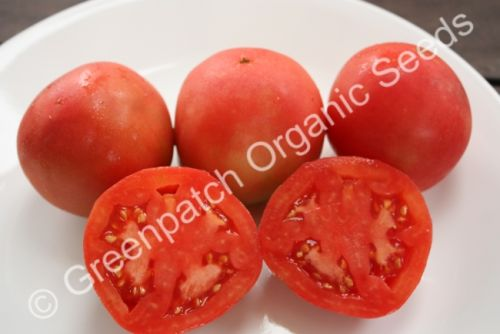 Tomato - Oxheart Pink