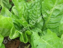 Spinach - Southern European