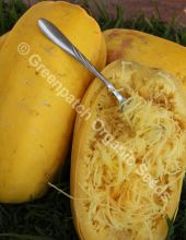 Squash - Vegetable Spaghetti