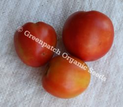 Tomato - Normans Special